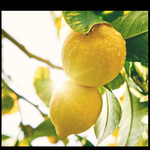 NutraZenith - TDT Bulle Citron
